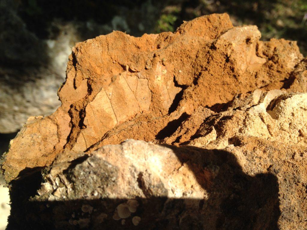 fossile tuf
